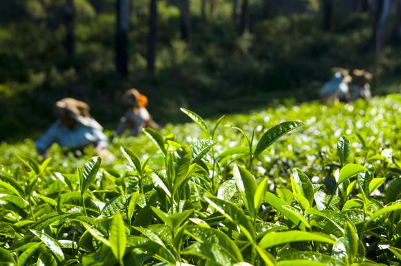 Студенты аграрных вузов примут участие в весенне-полевых работах