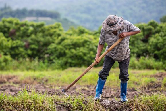 Роботизация сельского хозяйства — неизбежная реальность?